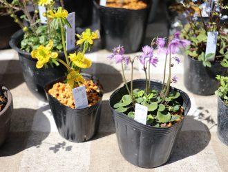 春~山菜・花々~