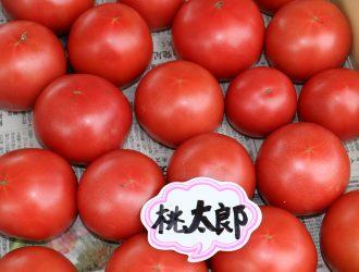 夏 ~夏野菜・飛騨桃~