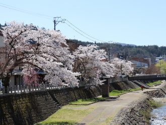 春 ~桜と朝市~